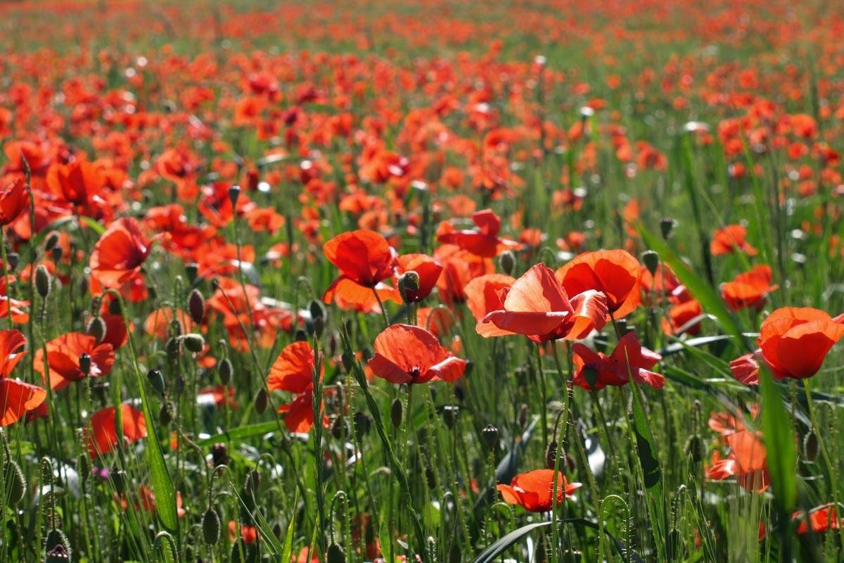 Flowers Plantation